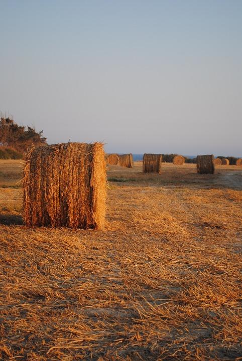 Hay Bales, Cyprus Fields, Agriculture, Rural, Hay
