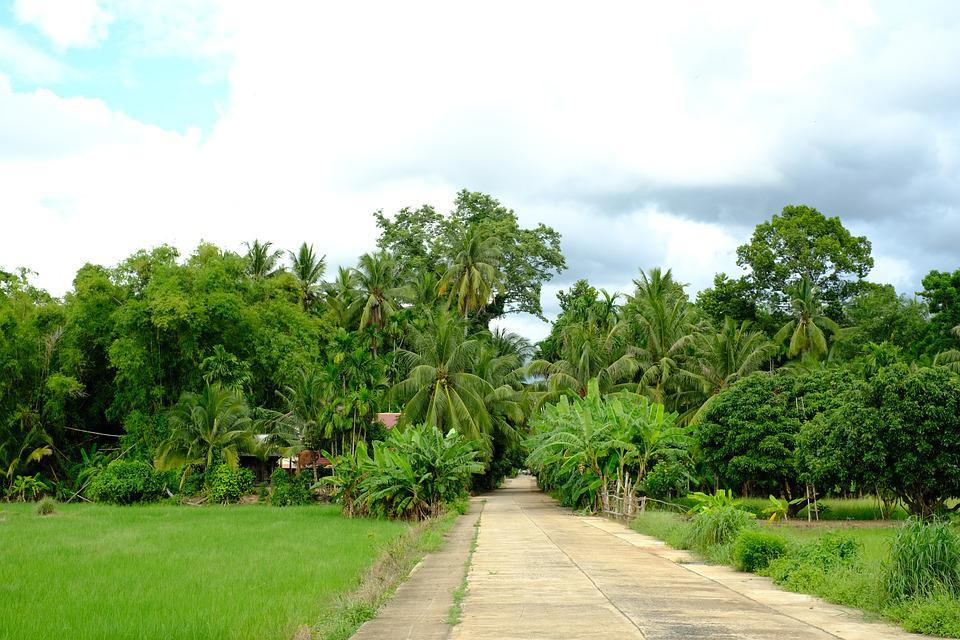 Countryside, Field, Farmlands, Rural, Landscape, Nature
