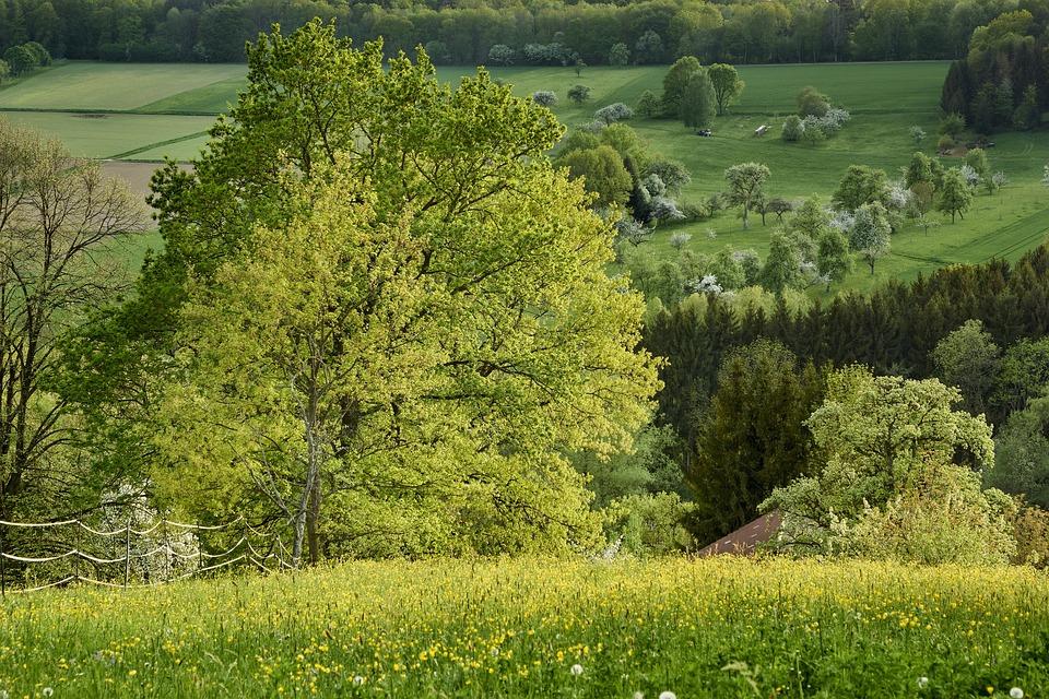 Nature, Landscape, Tree, Grass, Summer, Meadow, Rural