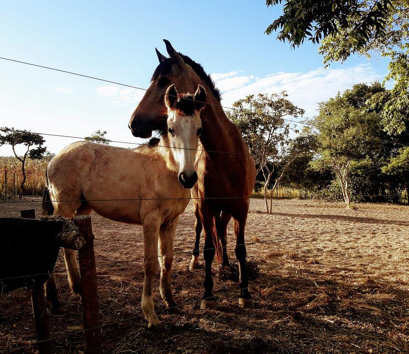Horses, Rural, Equine, Animals, Pastures, Nature