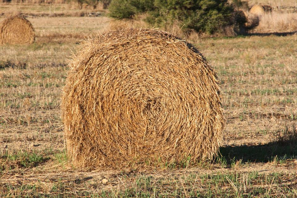 Straw, Field, Farm, Summer, Nature, Rural, Agriculture