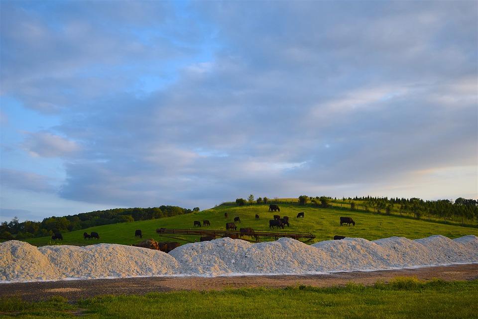 Cows, Farm, Hillside, Grass, Sunset, Agriculture, Rural