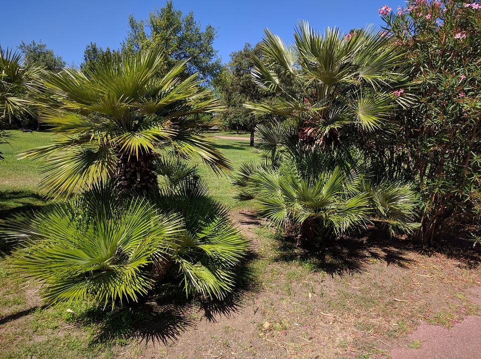 Palm Trees, Park, Meadow, Rush, Earth