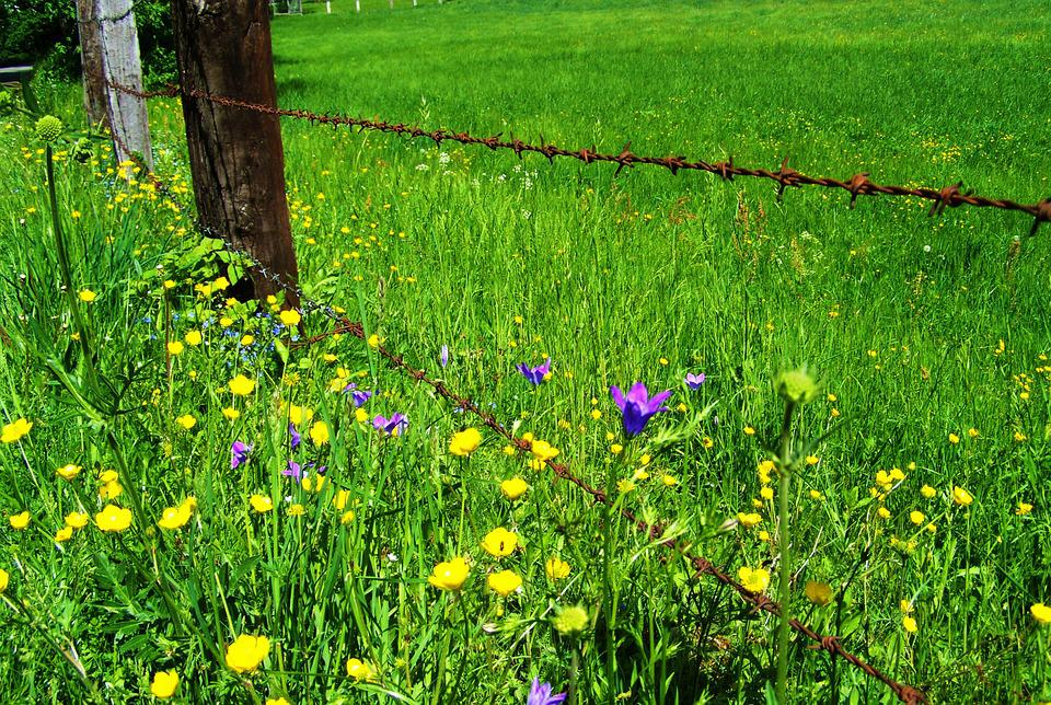 Meadow Flowers, Rusted Barbed Wire, Nature