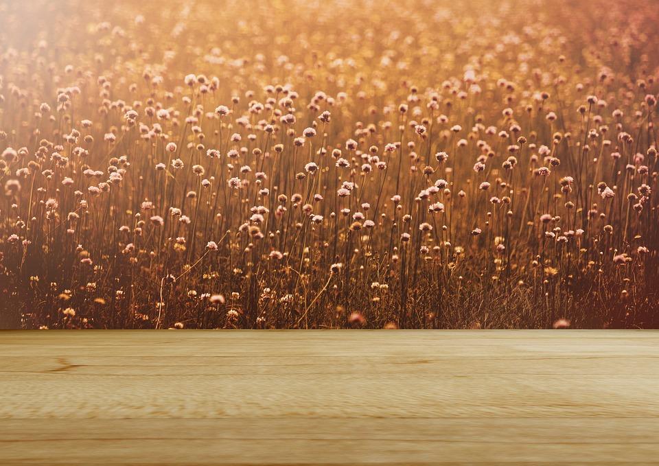 Background Image Flower Meadow Rustic Wood Romantic