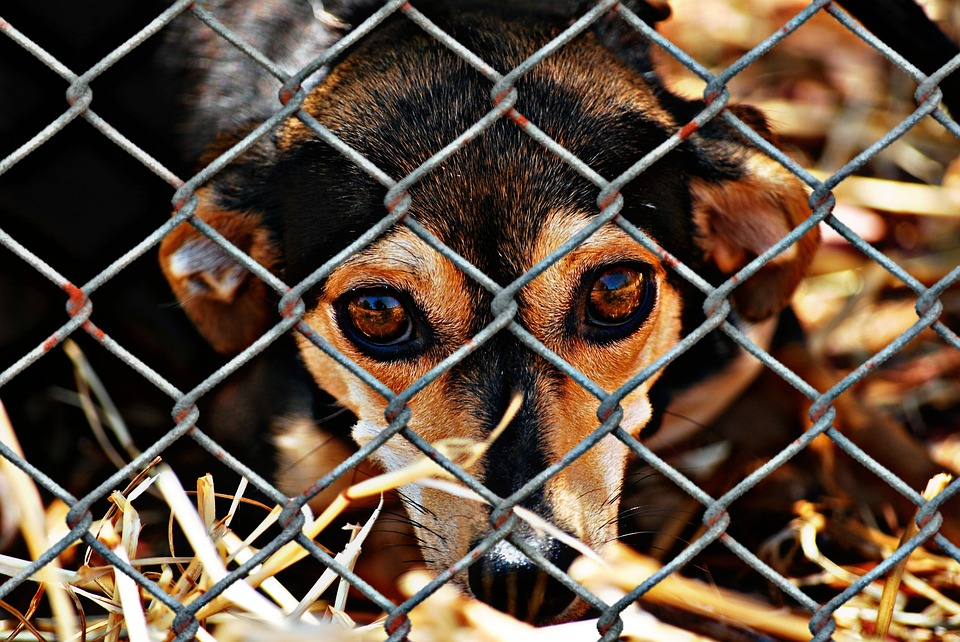 Animal Welfare, Dog, Imprisoned, Animal Shelter, Sad