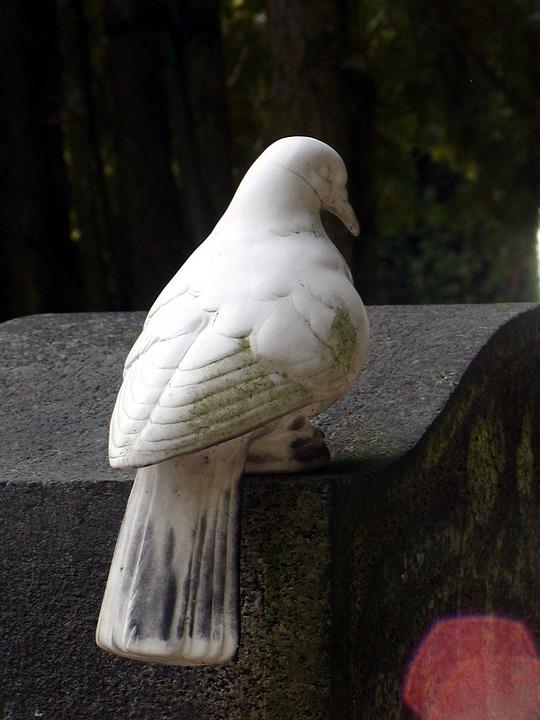 Sadness, Death, Dove, Cemetery, Tombstone
