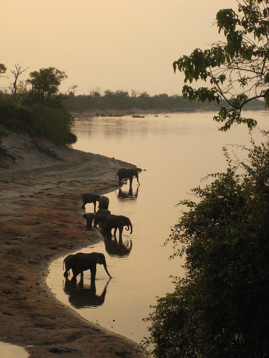 Elephant, Safari, Botswana, Africa