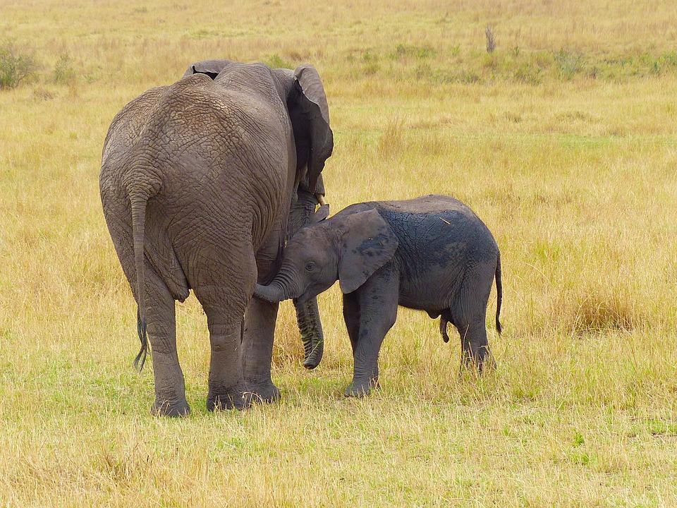 Elephant, Mother, Baby, Wildlife, Safari, Africa, Kenya