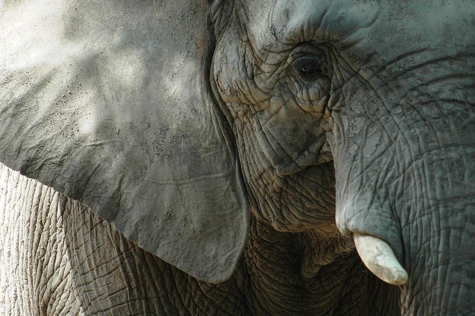 Elephant, Animal, Nature, Africa, Mammal, Safari