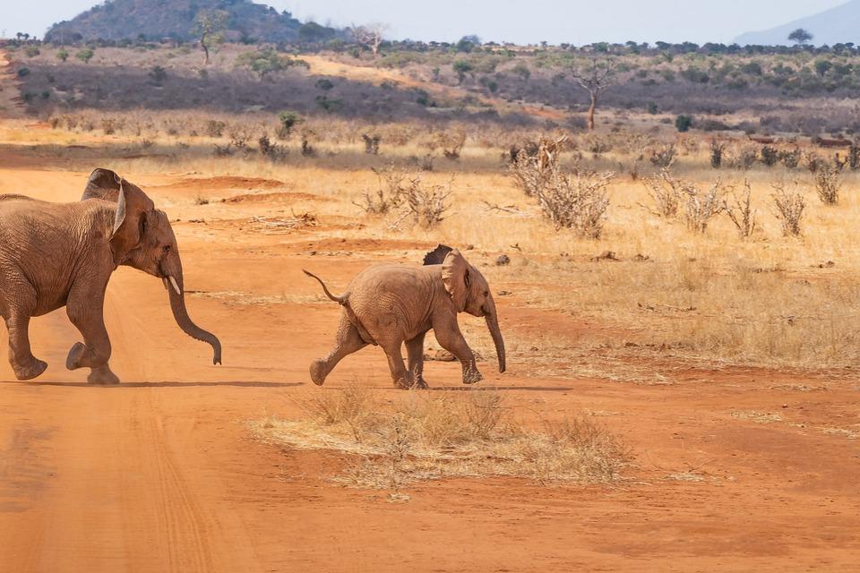 Safari, Elephant, Landscape, Nature, Africa, Savannah