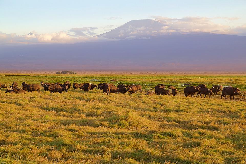 Africa, Park, National Park, Safari, Amboseli, Kenya