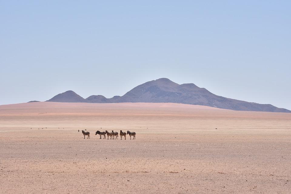 Namibia, Zebra, Africa, Safari, Landscape