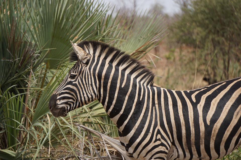 Wildlife, South Africa, Africa, Nature, Safari, Park