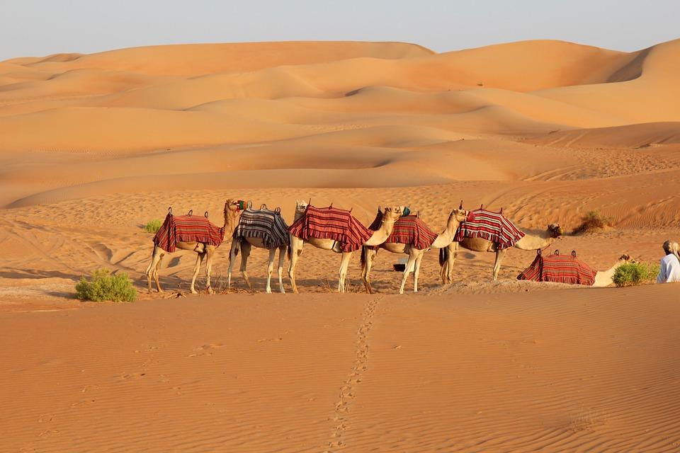 Desert, Camel, Sand, Safari, Dry