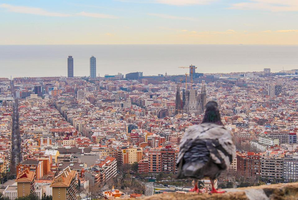 Barcelona, Sagrada Família, Paloma, Bcn, Architecture