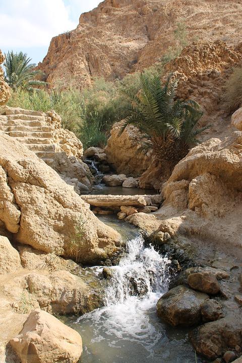 Oasis, Tunis, Africa, Sahara, Vacation, Paradise