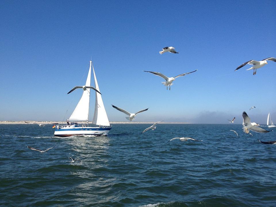 Sailing Boat, Gulls, North Sea