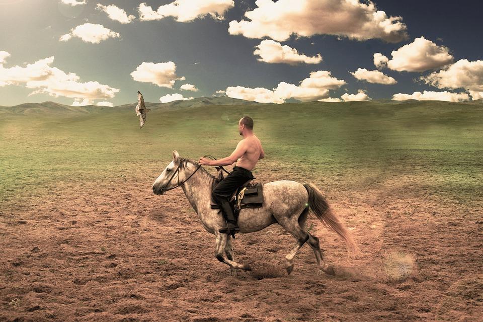 Saker, Horse, Clouds
