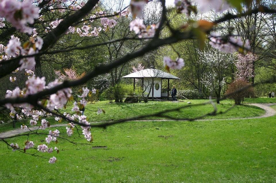 Sakura, Tree, Bloom, Pink, Gazebo