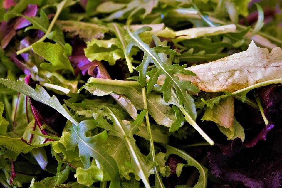 Salad, Eat, Healthy, Food, Frisch, Light Kost, Lunch