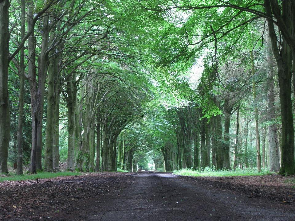 England, United Kingdom, Salisbury, Trees, Road