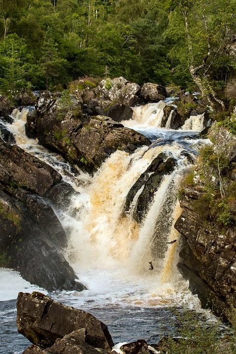 Scotland, Salmon, Rogie Falls, Waterfall