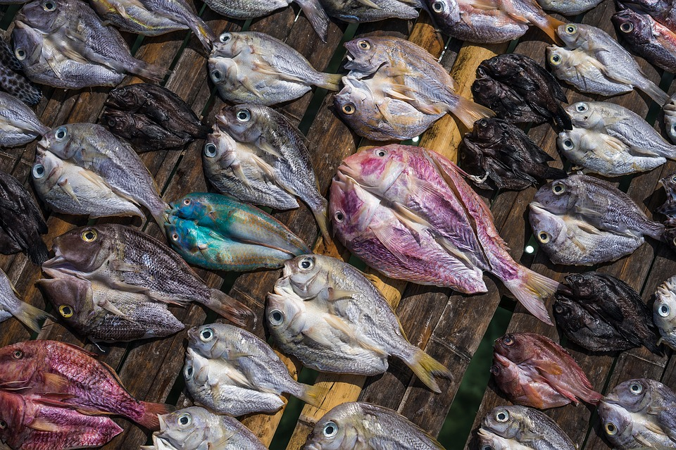 Salted Fish, Dried Fish, Color