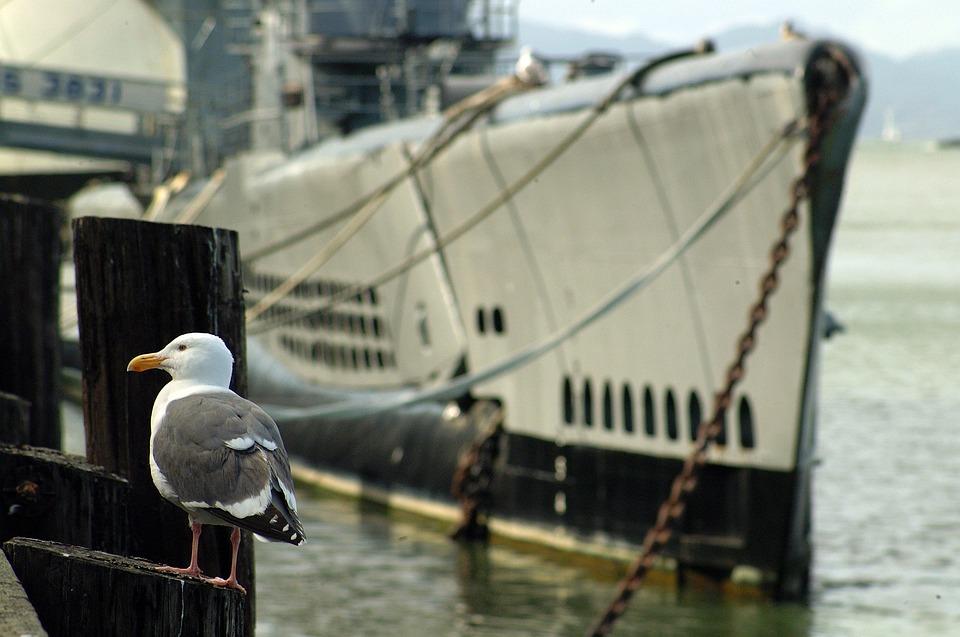Ship, Sea, Seagull, Boat, San Francisco, Bird, Nautica