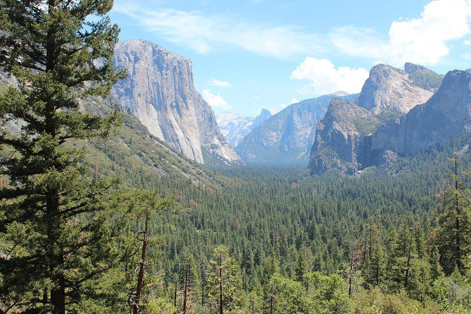 Yosemite Park, Yosemite, Us, San Francisco, Forest