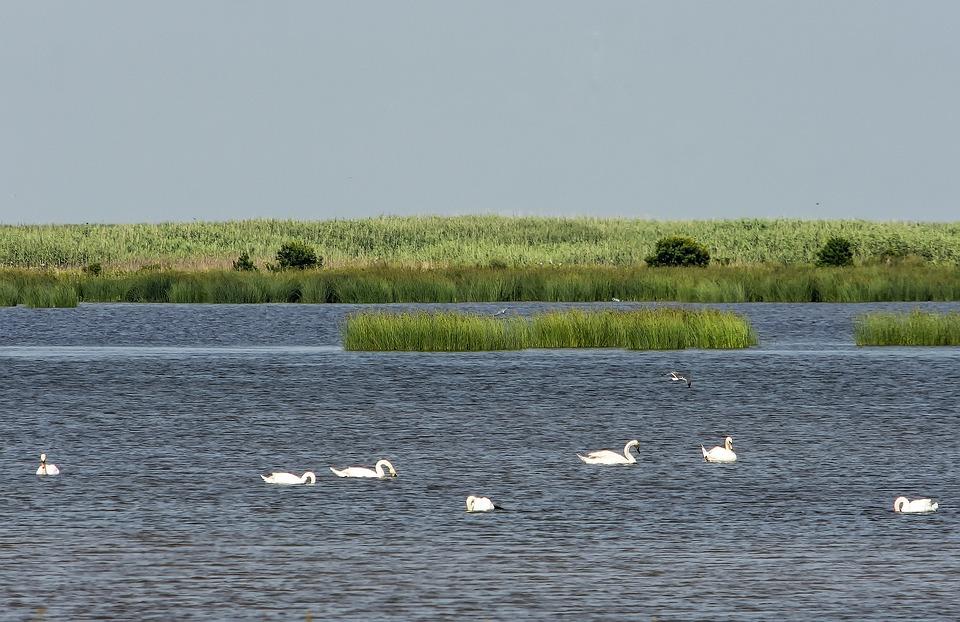 Birds, Wildlife, Water, Ocean, Bay, Sanctuary