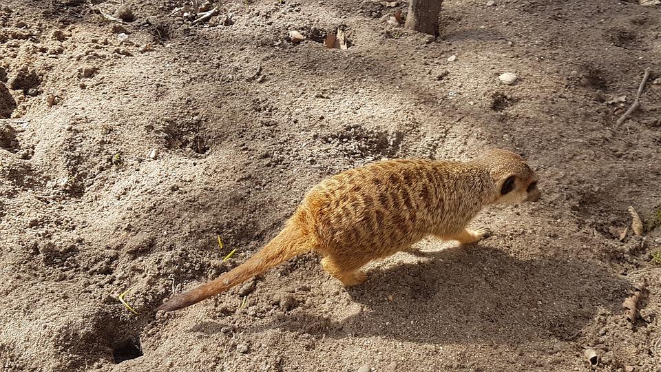 Nature, Sand, Desert, Animal World