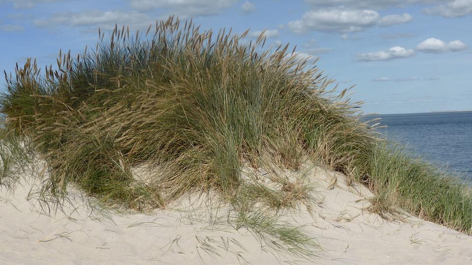 Dune, Sand Beach, Dune Grass, Recovery