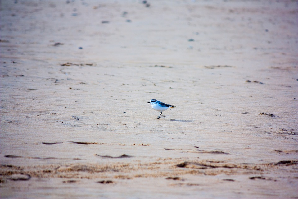 Beach, Bird, Sand, Nature, Animal