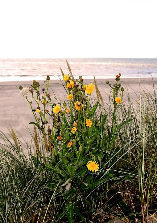 Sea, Most Beach, Flowers, Sand Beach