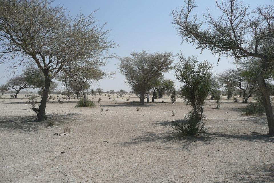 Sahara, Sahel, Bush, Sand, Africa