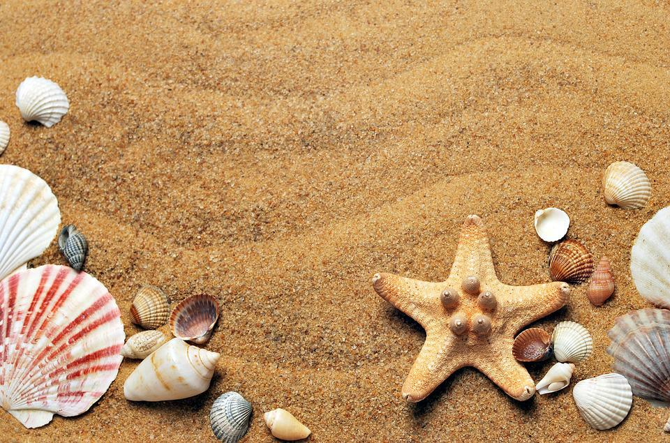 Sea, Sand, Coast, Beach, Seashells, Vacation, Nature