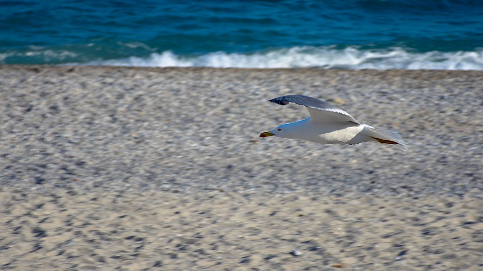 Seagull, Sea, Beach, Sand, Onda, Blue, Costa, Riva
