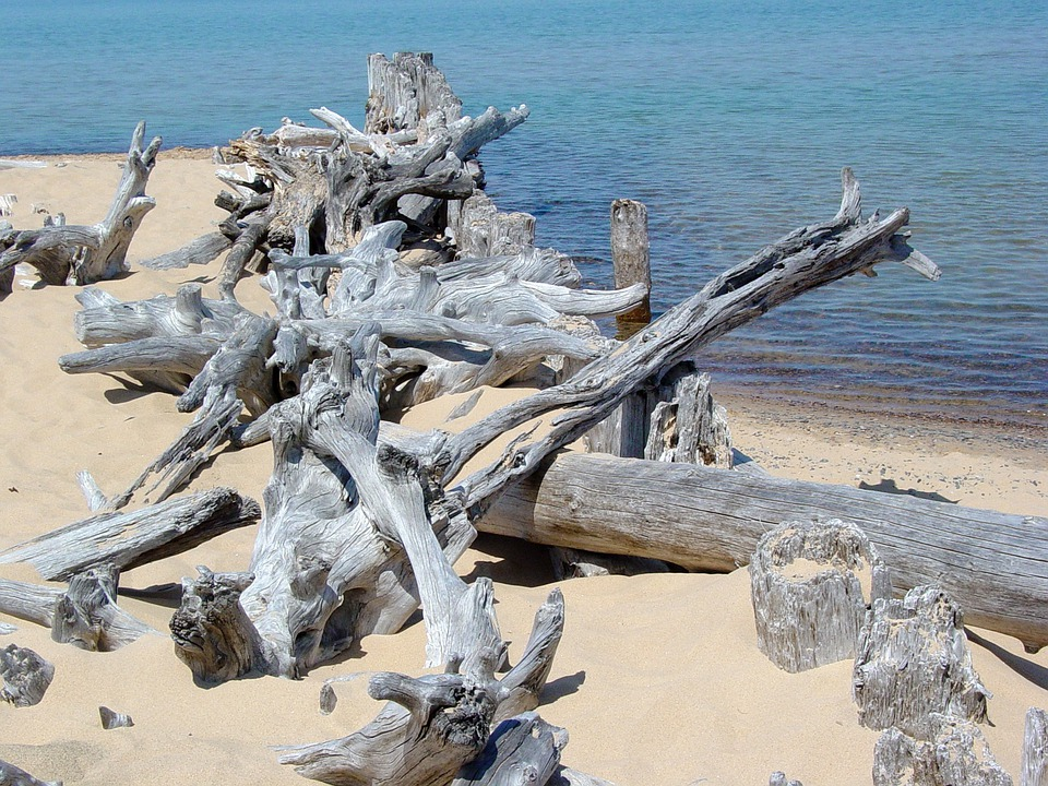 Driftwood, Lake Superior, Beach, Sand, Shore, Landscape