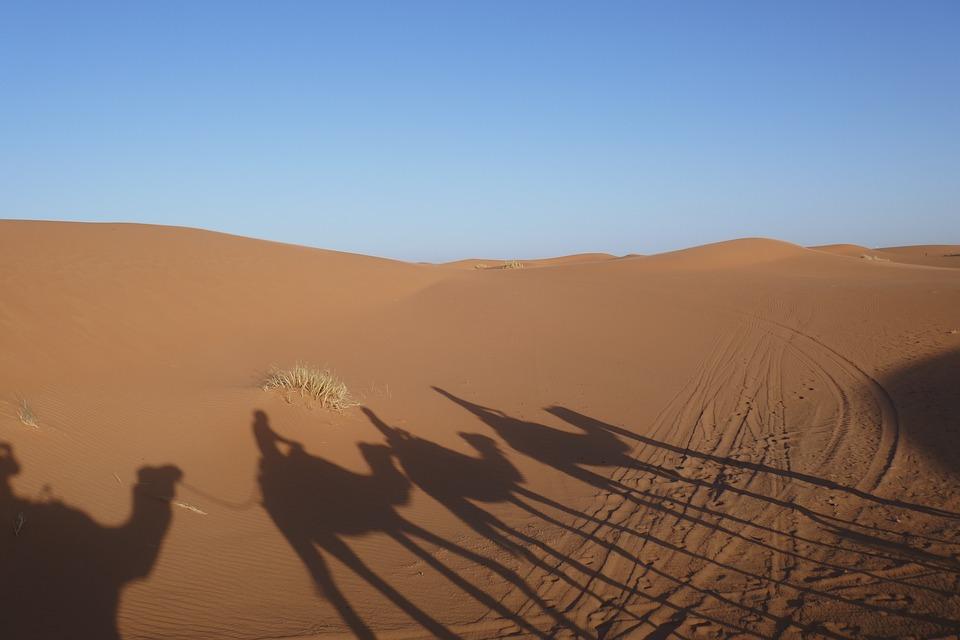 Desert, Shadow, Sand, Camel, Morocco, Sand Dune