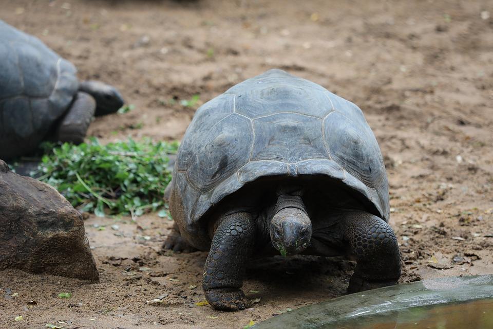 Tortoise, Sand, Grass