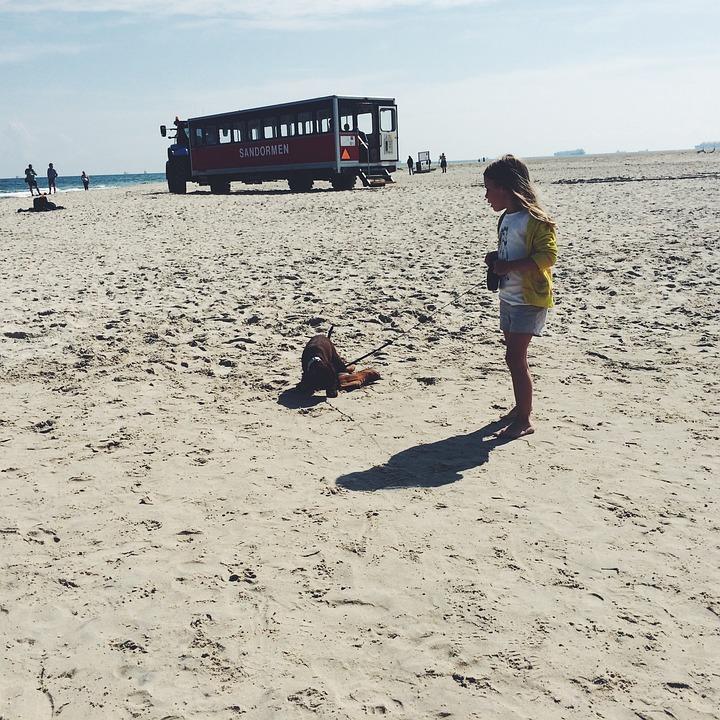 Dog, Beach, Pet, Sand, Sea, Puppy, Happy, Animal