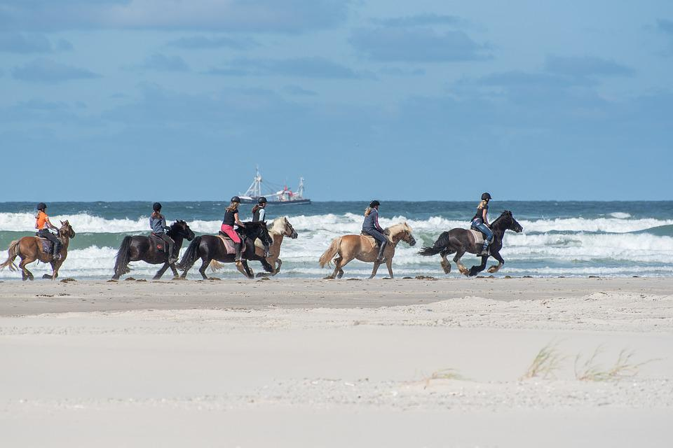 Horses, Beach, Sand, Sea, Water, Coast, Landscape
