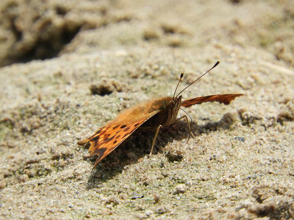 Butterfly, Sand, Beach, Insect