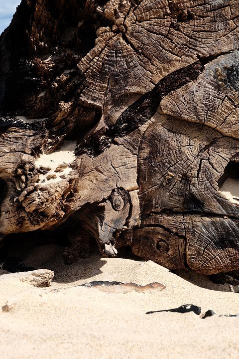 Wood, Sea, Nature, Tree, Driftwood, Beach, Sand, Coast