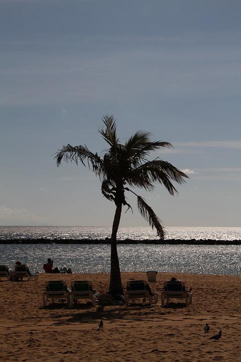 Palm, Beach, Tree, Palm Tree, Sand, Tenerife