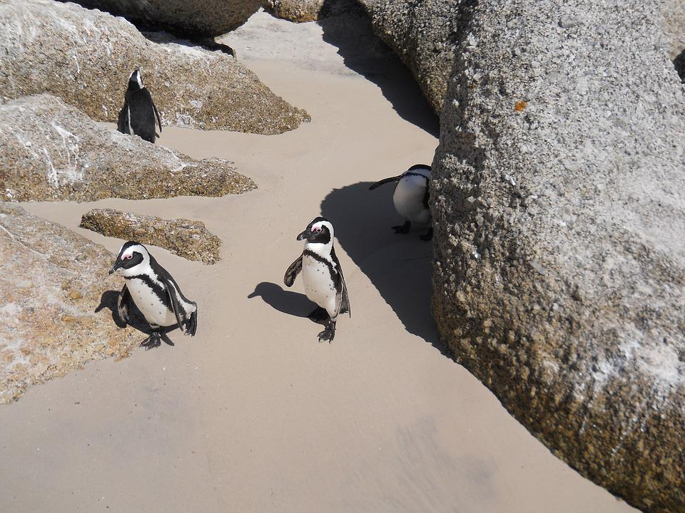 Boulders, Penguins, Sand Rock, Boulders Beach