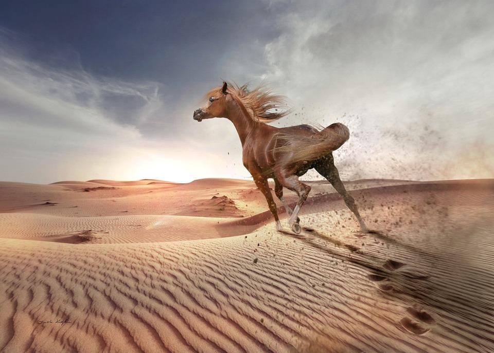 Desert, Sand, Sky, Nature, Sunset, Arabian Horse, Run