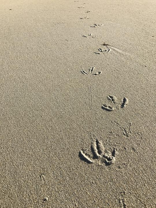 Sand, Sea, Borrows, Bird, Paw, Fingers, Soil, Texture