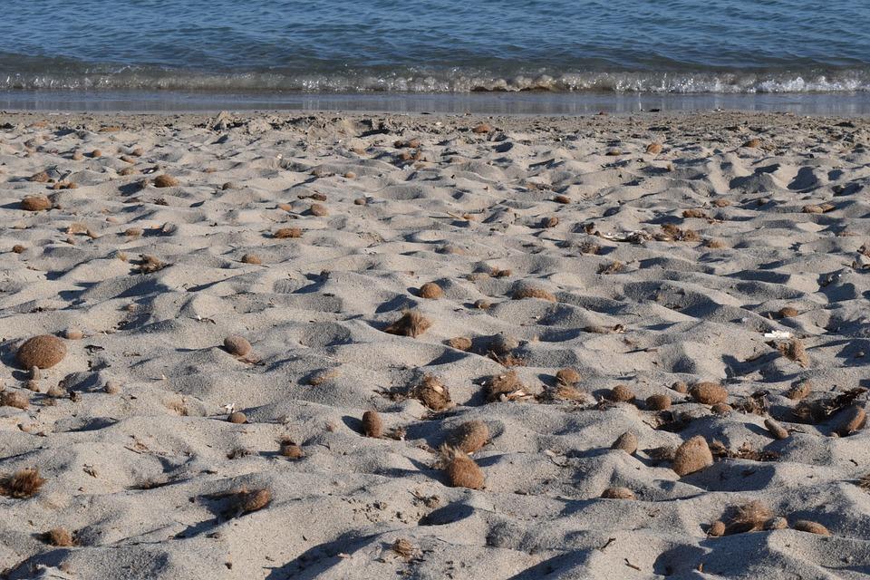 Beach, Sea, Coast, Background, Sand, Seaweed, Wave